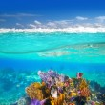 Mayská riviéra korálový útes pod vodou až po čáru ponoru — Stock fotografie