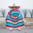 Mexican man sit sombrero serape and agave cactus — Stock Photo