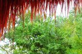 Jungle hut rain in rainforest water dropping detail — Stock Photo