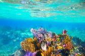 Mayan Riviera reef snorkel underwater coral paradise — Stock Photo