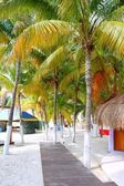 Isla Mujeres tropical North Beach Palm trees Mexico — Stock Photo