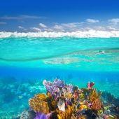 Riviera maya koraal rif onderwater omhoog omlaag waterlijn — Stockfoto