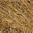 Hay and straw - Stock Photo