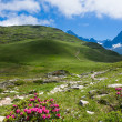 A beautiful view of the french alps — Stock Photo #5285631