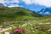 A beautiful view of the french alps — Stock Photo