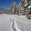 Path in Snow — Stock Photo #5205646
