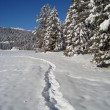 Path in the Snow — Stock Photo