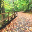 Wooden Bridge — Stock Photo #5209681