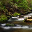 Creek in Forest — Stock Photo #5221700