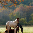 Horses Fall Theme — Stock Photo #5224390
