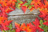 Fall Leaf Boarder — Stock Photo