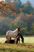 Horses Fall Theme — Stock Photo