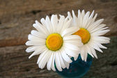 Spring Daisy — Stock Photo