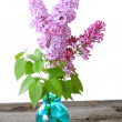 Lilacs — Stock Photo #5234664