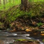 Small Stream — Stock Photo #5237853