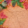 Autumn Texture — Stockfoto
