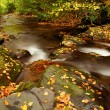Royalty-Free Stock Photo: Autumn Stream