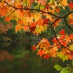 feuilles d'automne — Photo