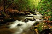 Pequeno riacho — Fotografia Stock