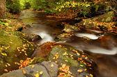 Autumn Stream — Stock Photo
