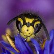 Stock Photo: Wasp on flower