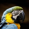 Macaw's head — Stock Photo