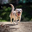 Domestic dog on the nature — Stock Photo