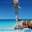 Dolphin jumping out of the water — Stock Photo #5214772