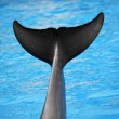 Stock Photo: Dolphin tail