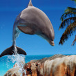 Dolphin jumping out of the water — Stock Photo