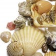 Right seashells on white - Stock Photo