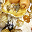 Many seashells - Stock Photo