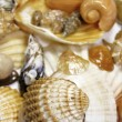 Several types of sea shells — Stock Photo