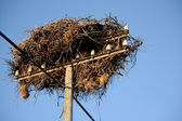 White stork nest — Stock Photo
