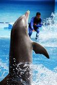 Dolphin dance — Stockfoto