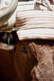Chef för bull — Stockfoto