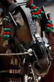 Detail der pferdekopf — Stockfoto