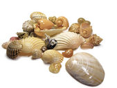 Bunch of sea shells — Stock Photo