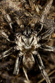 Spider on the wild — Stock Photo