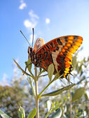 Butterfly on top — Stock Photo