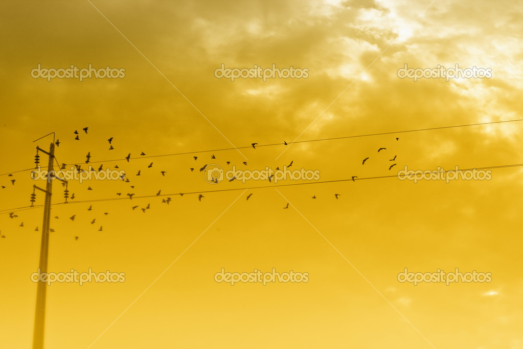 View of a flock of birds around an electrical power line. — Stock Photo #5213354