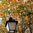Foto Stock: Streetlight and leafs