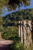 Dirt trail with fence — Stock Photo