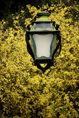 Streetlamp and tree — Stock Photo