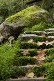 Steps of the forest — Stock Photo