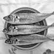 Black and white mackerel — Stock Photo