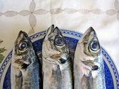 Three mackerel fish — Stock Photo