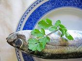 Mackerel fish on a plate — Stock Photo