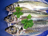 Close up mackerel view — Stock Photo