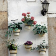 Several flower pots - Stock Photo